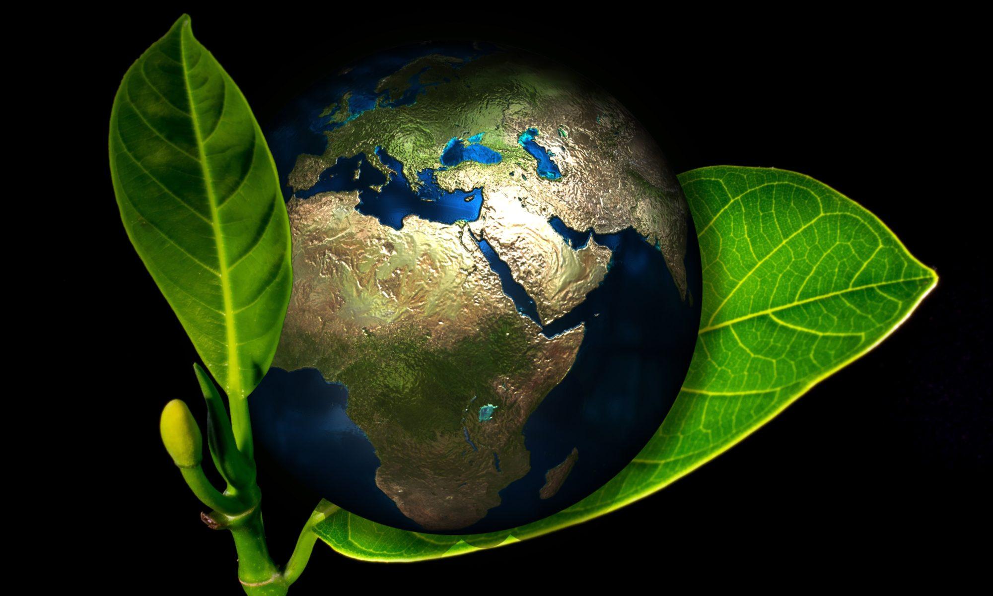 Produkty Biodegradowalne